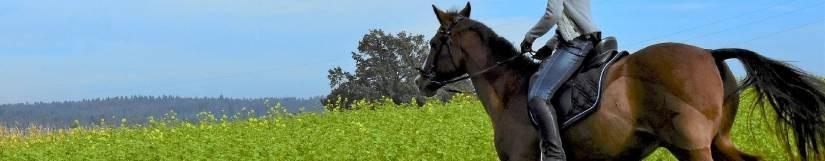 Alimentation cheval et poney de loisirs