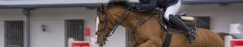 Alimentation cheval et poney de sport